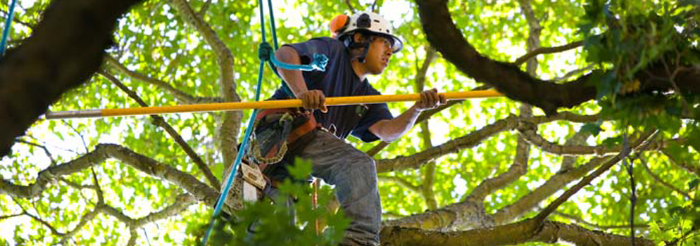 tree-pruning-project-in-portland-or