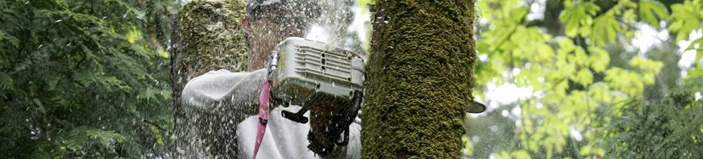 Tree Service Beaverton