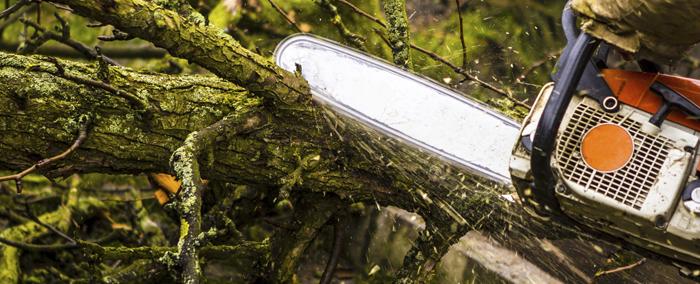 Tree Service Vancouver WA
