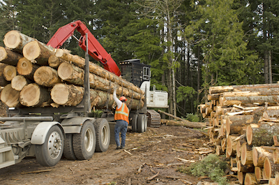 Logging Services A Tree Company Can Help You With
