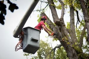 Tree Service Clackamas