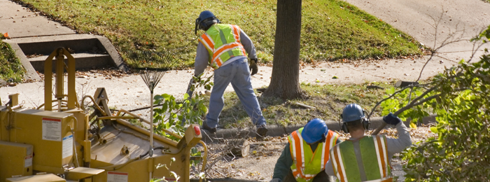Tree Service Estacada Oregon
