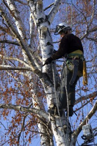 Tree Cutting Portland