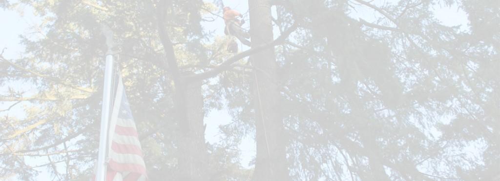tree-service-portland
