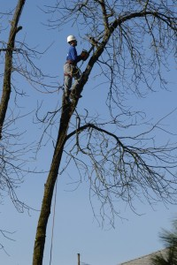 Tree Service Troutdale