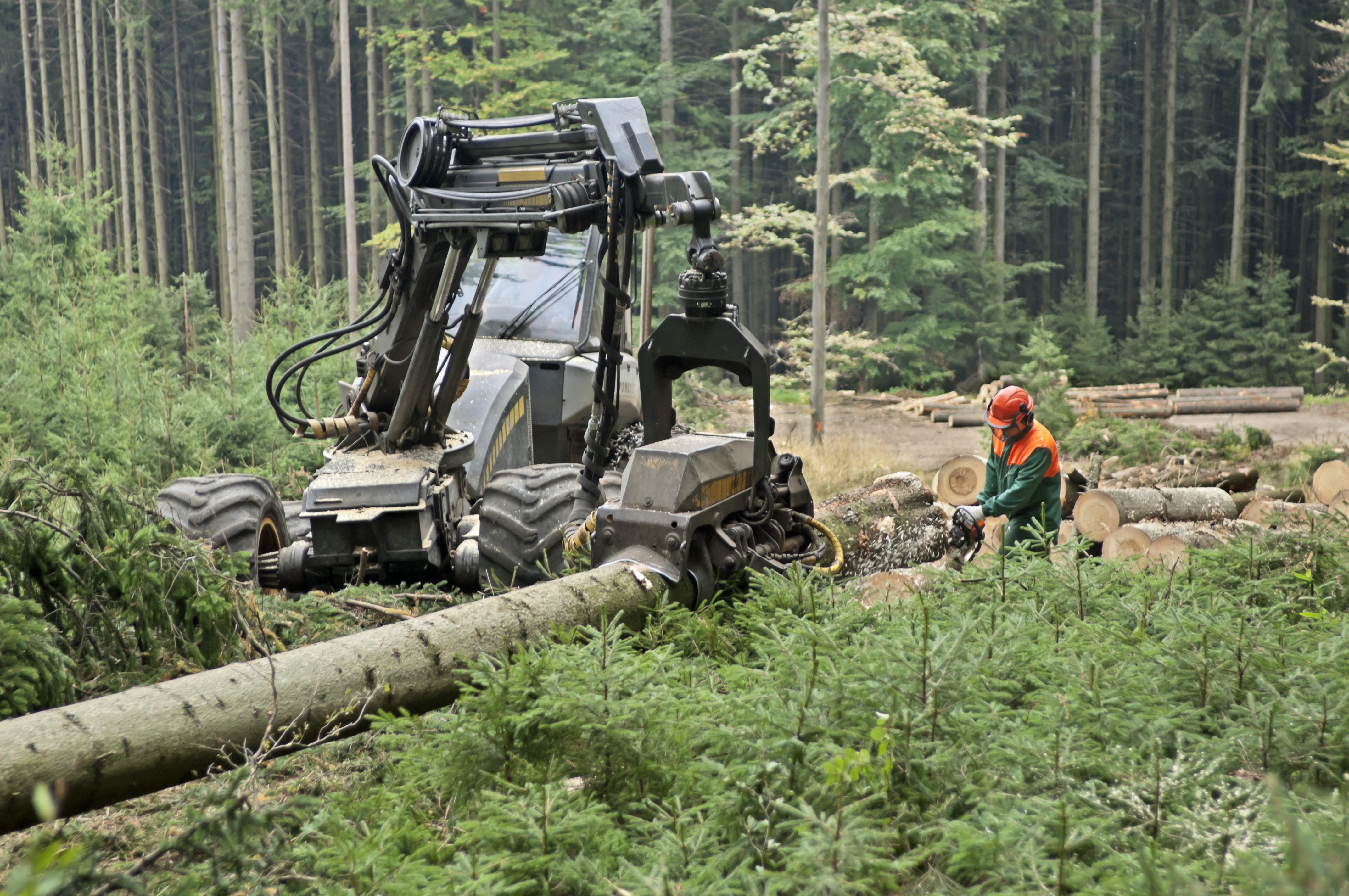Tree Service Yamhill