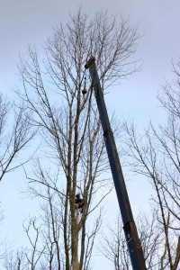 Tree Service Carlton OR