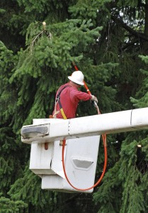 Tree Removal Oregon City