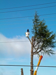 Tree Removal Troutdale OR