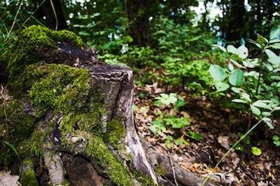 5 Reasons To Get That Tree Stump Removed