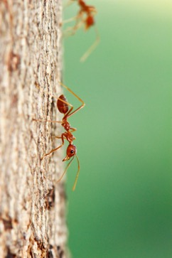 Controlling Ant Infested Tree Stumps