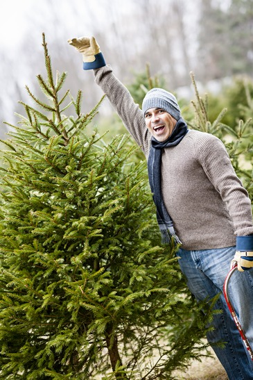 When Should I Cut Down My Christmas Tree?