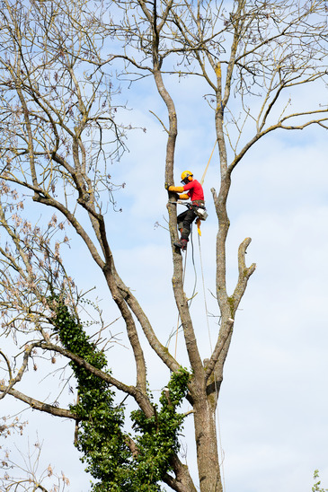 Can I Cut My Neighbor's Wild Tree?