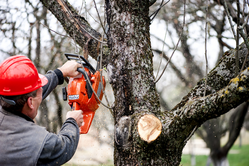 10 Tips for Removing Tree Limbs
