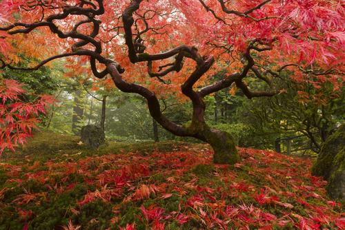Portland Heritage Trees 101