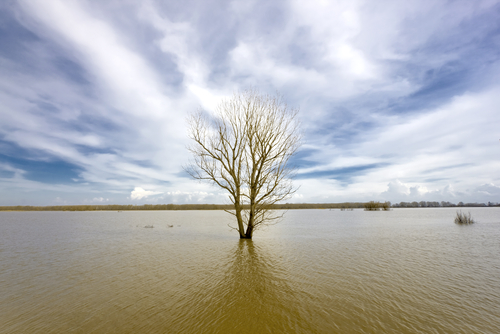 Flooding Causes Stress on Trees