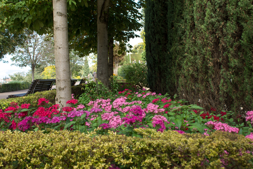 Plants That Will Survive Best Under A Tree Canopy