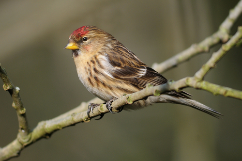 Trees to Plant to Attract Native Birds
