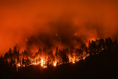 How an Environment Benefits From Forest Fires (1)
