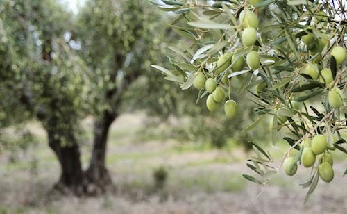 Trees That Provide Medicinal Benefits