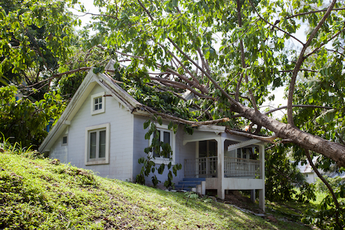 When to Call for Emergency Tree Services
