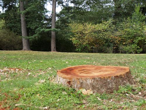 Should I Remove a Tree Stump