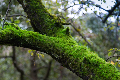 What You Should Know if Moss is Growing on Your Trees