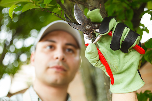 What is the Role of an Arborist