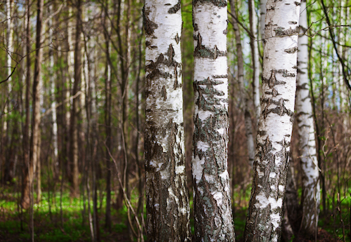 Everything You Want to Know About Tree Bark