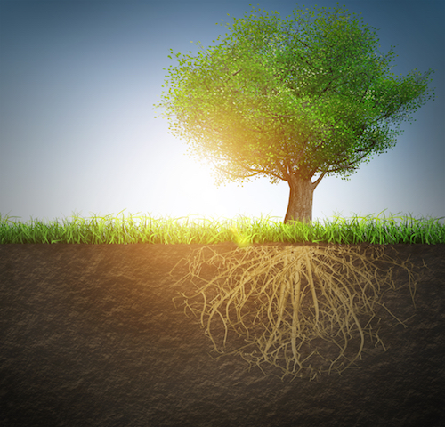 The Importance of Strong Tree Root Systems