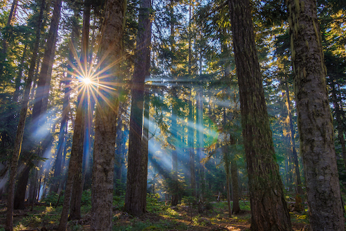 5 Unexpected Pacific Northwest Tree Facts - Benefits of Trees