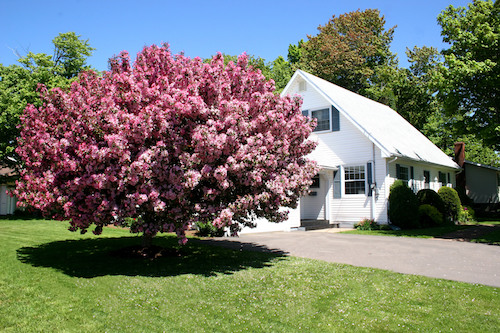 6 Trees Perfect for Your Portland Front Yard