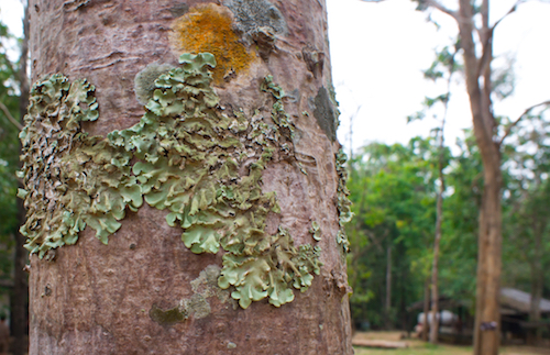 Lichen 101 What You Really Want to Know