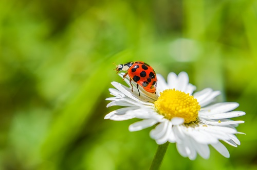 The Beneficial Bugs You Want in Your Yard