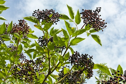 The Fruit Bearing Trees That Are in Bloom This Season (1)