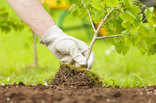 Want a Healthy Tree Care For its Roots