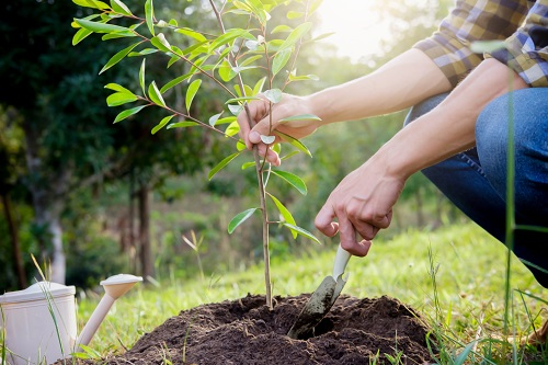 5 Signs Your Newly Planted Tree Needs More Attention