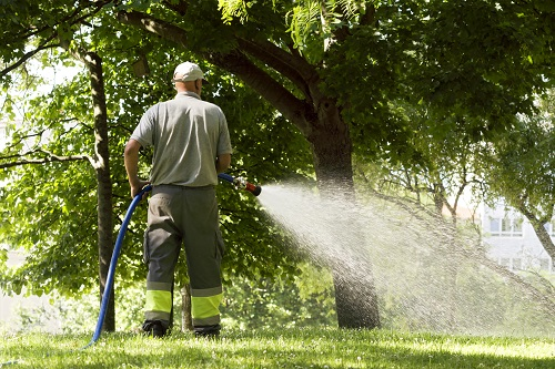 Should You Water Your Trees During The Dry Summer Months