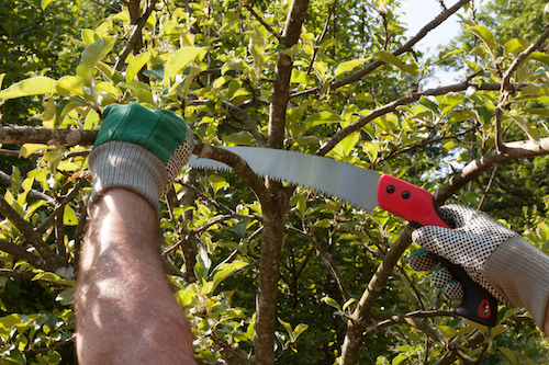 Tree Pruning What Not To Do