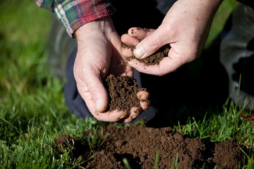 What to Look for When Assessing Soil Quality