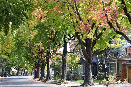 Who is Responsible if a Neighborhood Tree is Obstructing Street Visibility