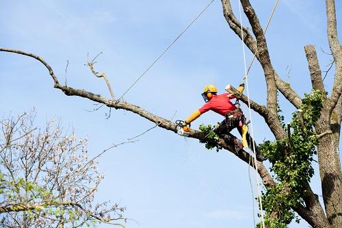 Arborist Working on Tall Tree - Cut the Tall Trees Blog