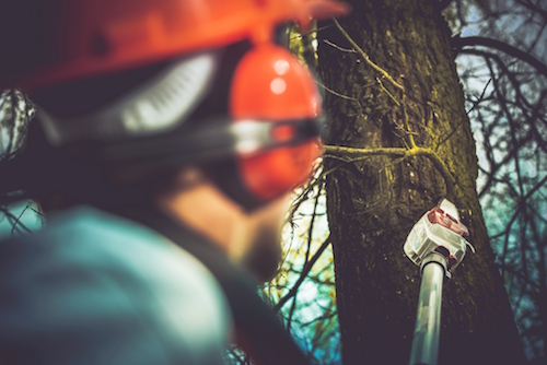 5 Times You Should Reach Out to an Oregon Arborist