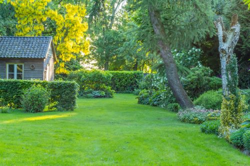 Add Native Trees & You're One Step Closer to the Backyard Habitat Certification
