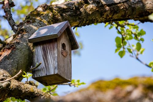 Attract Portland Area Birds with Nesting Boxes