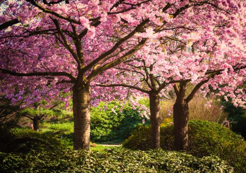 The Perfect Native Flowering Trees and Shrubs for Your Yard