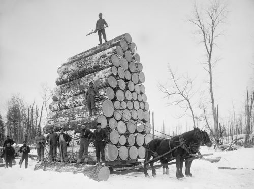 6 Facts About Oregon Logging and Its History