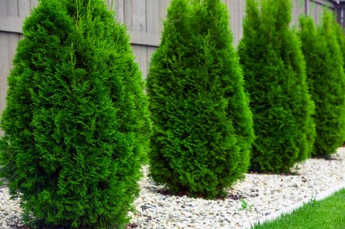 The Least Messy Trees for your Yard