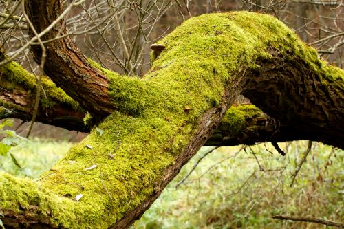 Four Essential Questions about Moss Growing on Your Trees