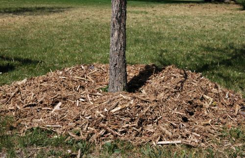 Can You Use Fresh Wood Chips as Mulch